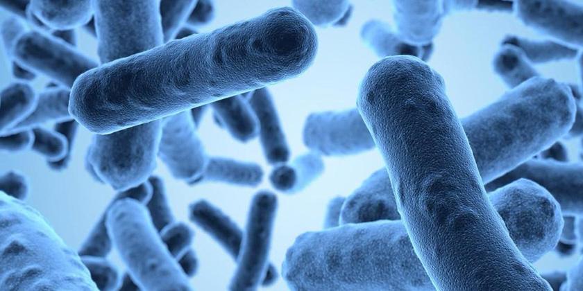抗菌活性測試